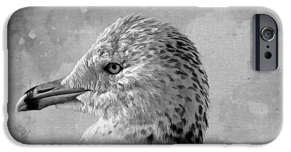 Fauna iPhone Cases - Seagull Portrait iPhone Case by HH Photography