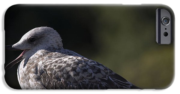 Seagull Pyrography iPhone Cases - Seagull iPhone Case by Radivoj  Cvetojevic