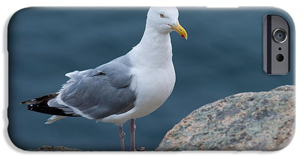 Sea Birds Photographs iPhone Cases - Seagull iPhone Case by Sebastian Musial