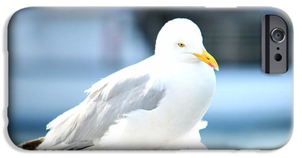 Seagull iPhone Cases - Seagull iPhone Case by Sharon Lisa Clarke