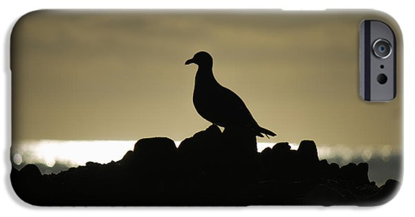 Heisler Park iPhone Cases - Seagull Silhouette iPhone Case by David Daniel Adventures