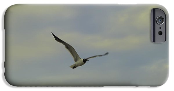 Flying Seagull Digital Art iPhone Cases - Seagull Soaring iPhone Case by Bill Cannon