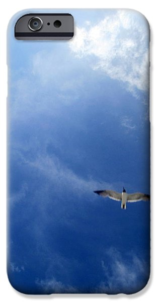 Flying Seagull iPhone Cases - Seagull Soaring iPhone Case by Randall Weidner