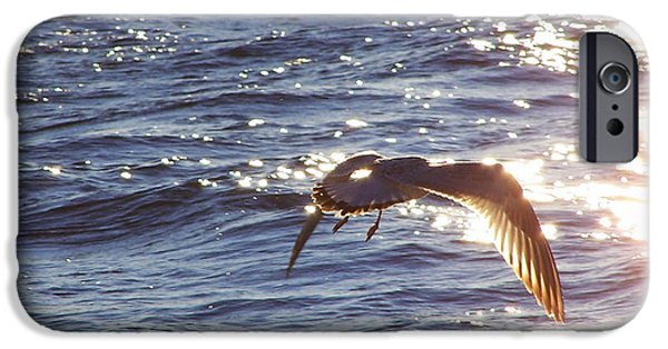Sea Birds iPhone Cases - Seagull Sunset iPhone Case by Karl Monkemeyer