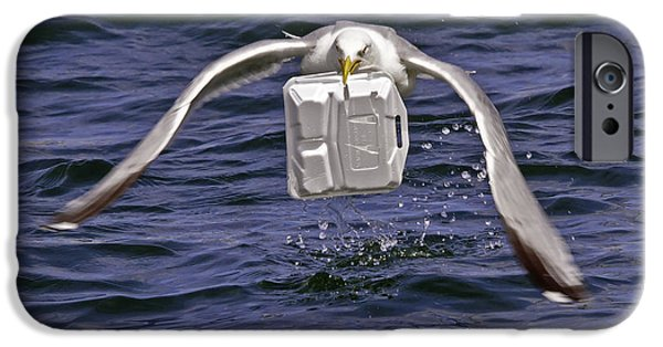 Boston Ma iPhone Cases - Seagull takeout service iPhone Case by David Freuthal