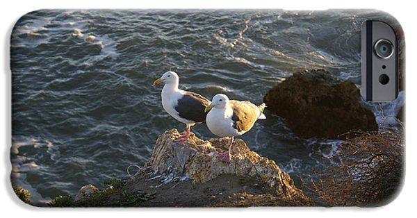 Sea Birds Digital Art iPhone Cases - Seagulls AKA Pismo Poopers iPhone Case by Barbara Snyder