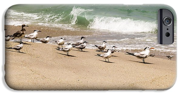 Wildlife Photographs iPhone Cases - Seagulls and sandpipers iPhone Case by Zina Stromberg