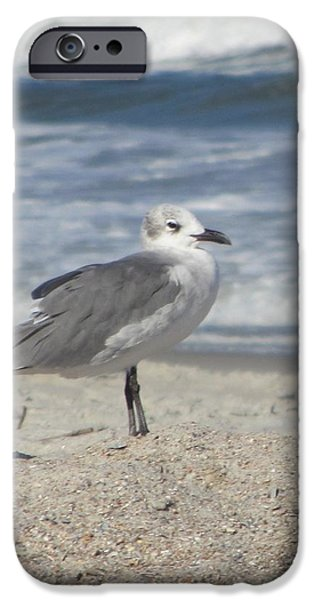 Seagulls at Fernandina 2 iPhone Case by Cathy Lindsey