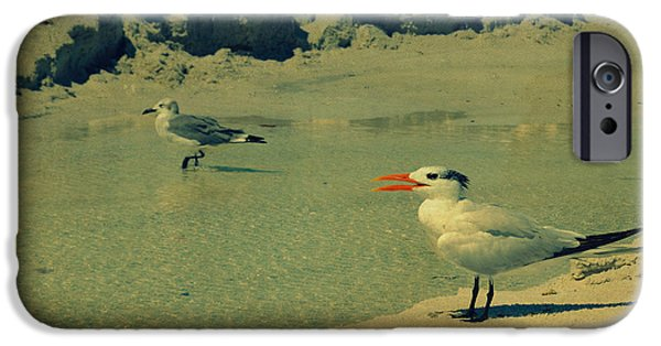 Sea Birds Digital Art iPhone Cases - Seagulls at the Beach II iPhone Case by Patricia Awapara