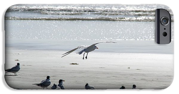 Recently Sold -  - Flying Seagull iPhone Cases - Seagulls by the Seashore iPhone Case by Patricia Twardzik