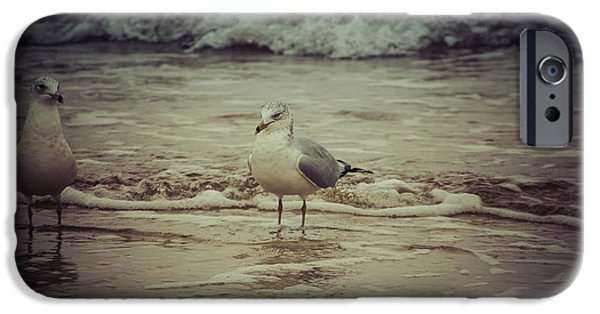 Freedom iPhone Cases - Seagulls  iPhone Case by Debra Forand