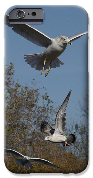 Seagull iPhone Cases - Seagulls iPhone Case by Ernie Echols