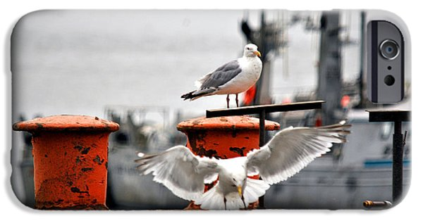 Seagull iPhone Cases - Seagulls Expression iPhone Case by Debra  Miller