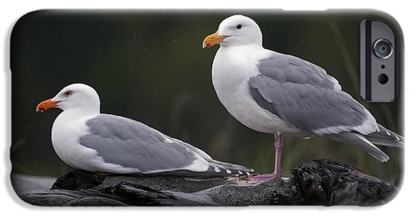 Seagull iPhone Cases - Seagulls iPhone Case by Gary Langley