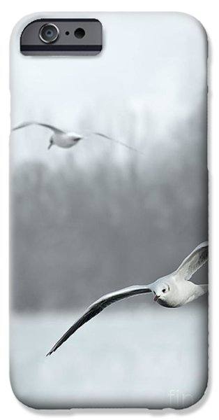 Winter Scene Pyrography iPhone Cases - Seagulls iPhone Case by Jelena Jovanovic
