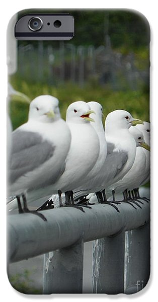 Seagull Drawings iPhone Cases - Seagulls iPhone Case by Jennifer Kimberly
