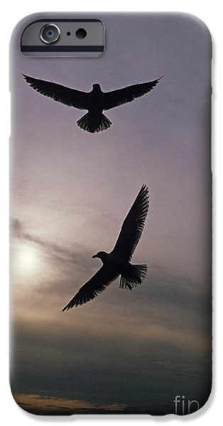 Flying Seagull iPhone Cases - Seagulls iPhone Case by Jim Corwin