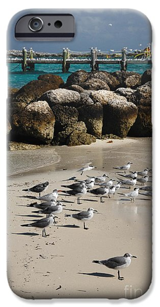 Private Island iPhone Cases - Seagulls on CoCo Cay Bahamas iPhone Case by Amy Cicconi