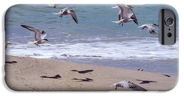 Flying Seagull iPhone Cases - Seagulls on the wing iPhone Case by Zina Stromberg