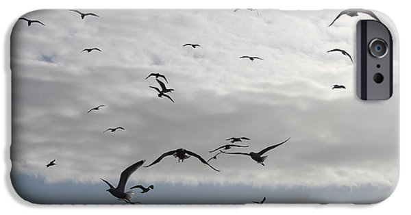 Recently Sold -  - Flying Seagull iPhone Cases - Seagulls iPhone Case by Robert Phelan