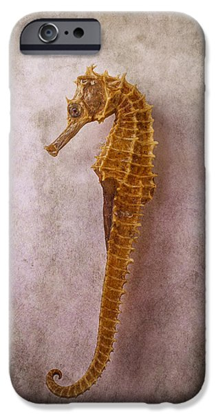 Fish Photographs iPhone Cases - Seahorse Still Life iPhone Case by Garry Gay