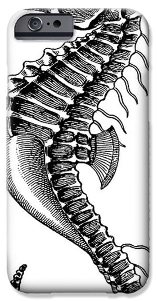 Animal Drawings iPhone Cases - Seahorse iPhone Case by Unknown