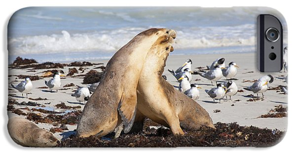 Sea Lions iPhone Cases - Seal Beach Battle iPhone Case by Mike Dawson