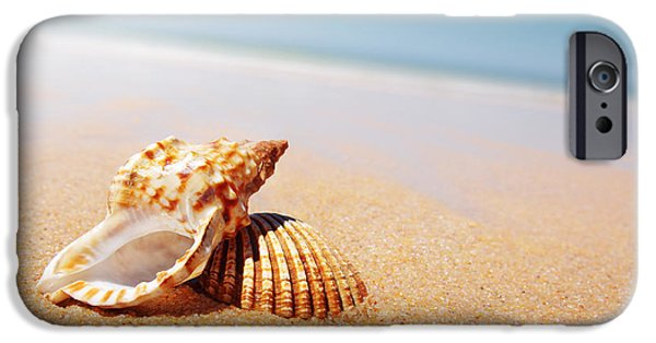 Seascape iPhone Cases - Seashell and Conch iPhone Case by Carlos Caetano