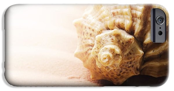 Coast Pyrography iPhone Cases - Seashell iPhone Case by Jelena Jovanovic