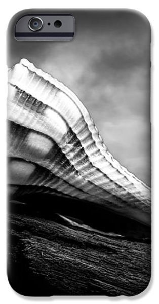 Seashell Without The Sea iPhone Case by Bob Orsillo