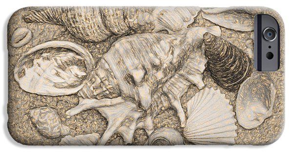 United States iPhone Cases - Seashells Collection Drawing iPhone Case by Sandi OReilly