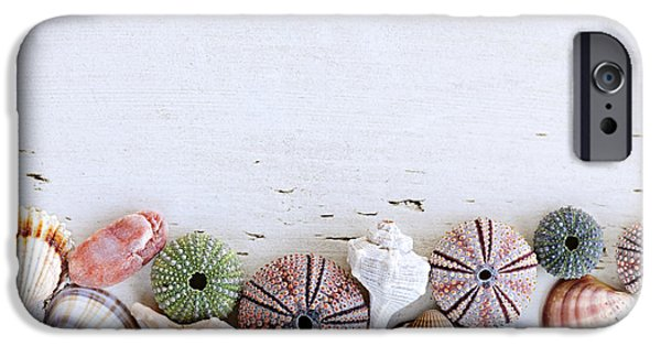 Board iPhone Cases - Seashells on wood background iPhone Case by Elena Elisseeva