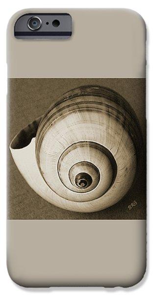 Brg iPhone Cases - Seashells Spectacular No 25 iPhone Case by Ben and Raisa Gertsberg