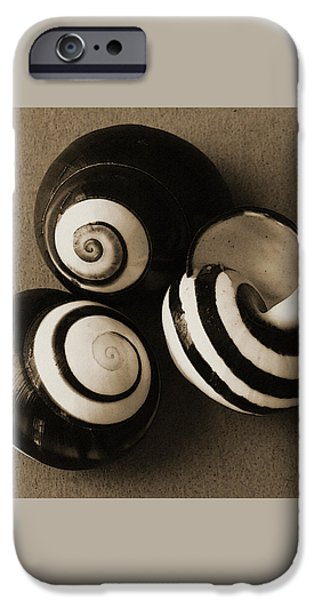 Seashells Spectacular No 27 iPhone Case by Ben and Raisa Gertsberg