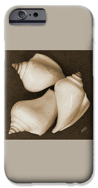 Brg iPhone Cases - Seashells Spectacular No 4 iPhone Case by Ben and Raisa Gertsberg