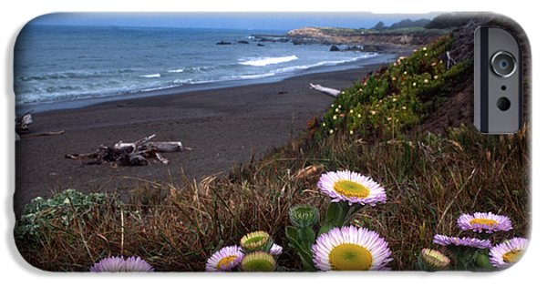 Cambria iPhone Cases - Seaside Daisies on Moonstone Beach iPhone Case by Kathy Yates