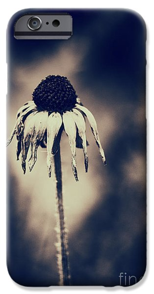 Abstracted Coneflowers iPhone Cases - Seasons End iPhone Case by Tim Gainey