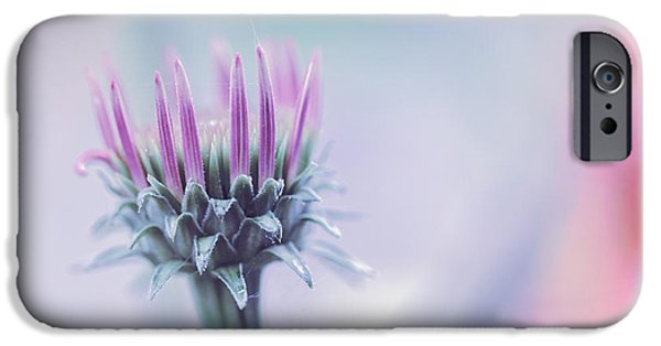 Cone Flower iPhone Cases - Seasons Journey iPhone Case by Bob Orsillo