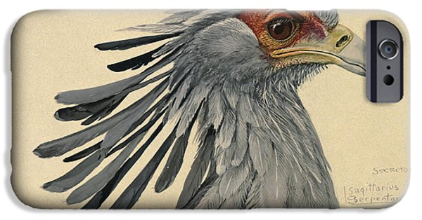 Ethiopia iPhone Cases - Secretary Bird iPhone Case by Louis Agassiz Fuertes