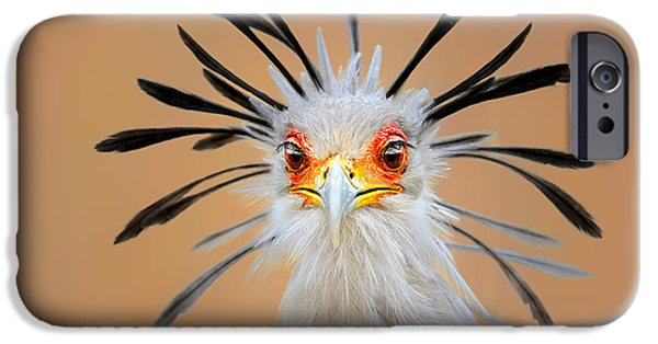 Nobody Photographs iPhone Cases - Secretary bird portrait close-up head shot iPhone Case by Johan Swanepoel