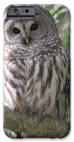Barred Owl iPhone Cases - Security Cam iPhone Case by Randy Hall