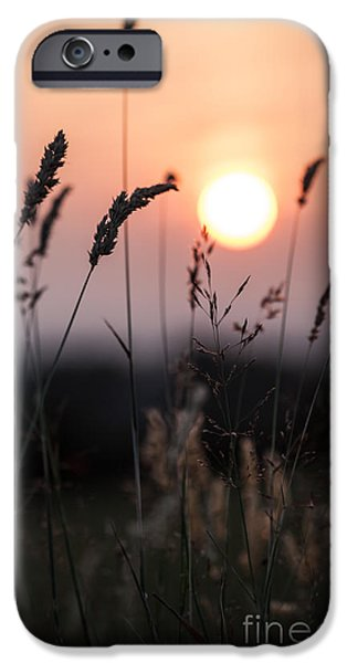 Range iPhone Cases - Seed Heads At Sunset iPhone Case by Jan Bickerton