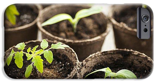 Gardening iPhone Cases - Seedlings  iPhone Case by Elena Elisseeva