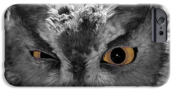 Photos Of Birds iPhone Cases - Selective Flirting iPhone Case by Skip Willits