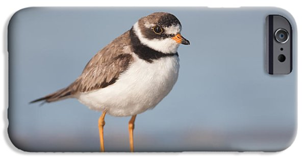 Lapwing iPhone Cases - Semipalmated Plover iPhone Case by Clarence Holmes