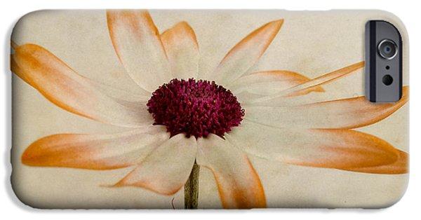 Senetti iPhone Cases - Senetti pericallis Orange Tip iPhone Case by John Edwards