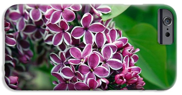 Purple Sensation iPhone Cases - Sensation Lilac iPhone Case by Richard Engelbrecht