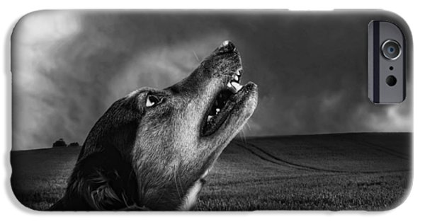 Growling iPhone Cases - Senses on Alert iPhone Case by Mountain Dreams