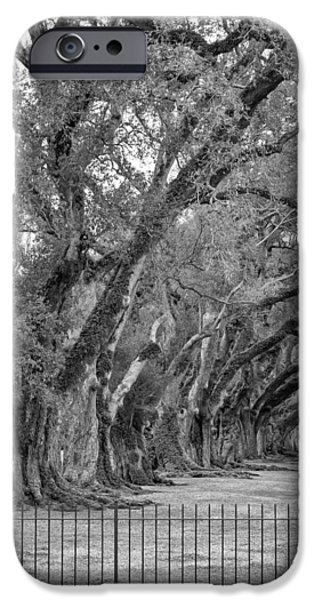 Oak Alley Plantation iPhone Cases - Sentinels monochrome iPhone Case by Steve Harrington