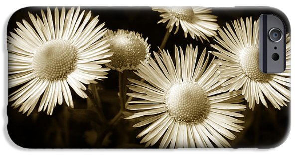 Sepia Flowers iPhone Cases - Sepia Flowers iPhone Case by Christina Rollo